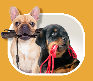two dogs with leashes in mouths